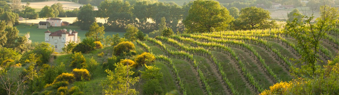 Le château de Herrebouc vu de ses vignes en coteaux